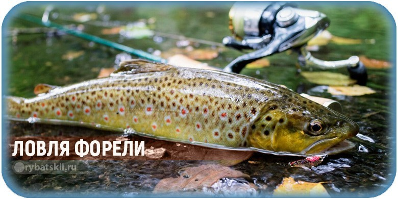 Как поймать форель и на что лучше всего клюёт радужная рыба