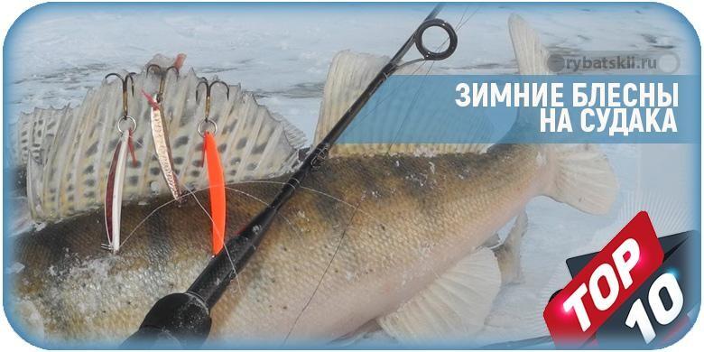 Выбор блесны на судака зимой и техника ловли клыкастого