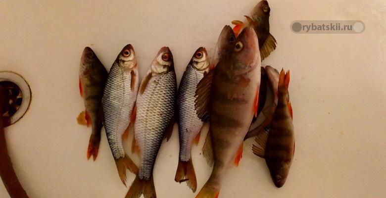 Фото с рыбалки №7