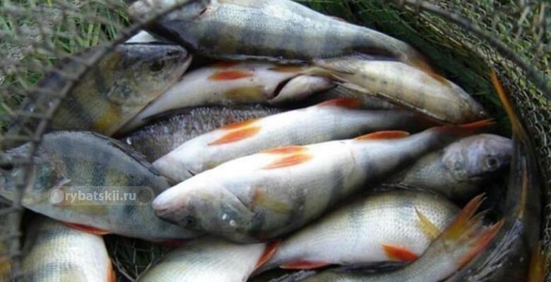 Фото с рыбалки №4