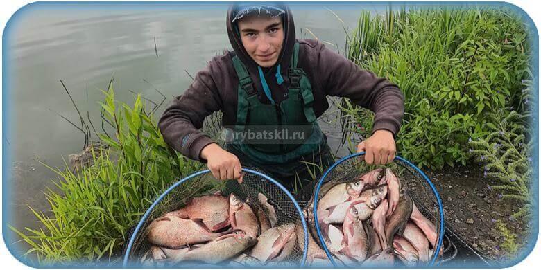Фидерная рыбалка на леща для начинающих и нюансы подготовки к ловле