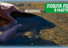 Ловля леща на фидер в марте и подготовка к рыбалке