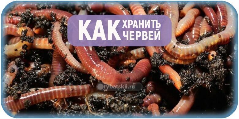 Как сохранить червей для рыбалки разными способами