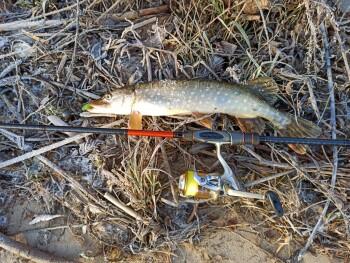 Фото с рыбалки на Оке на щуку