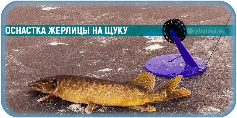 Как оснастить жерлицу на щуку зимой под разные условия рыбалки
