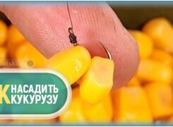 Как насадить кукурузу на крючок для карпа, карася и леща