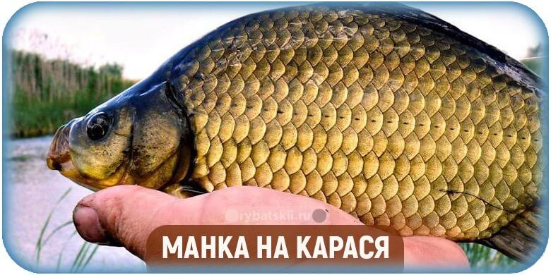 Как сделать манку для рыбалки на карася