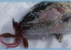 Оснастка снастей для зимней рыбалки на форель и выбор приманок