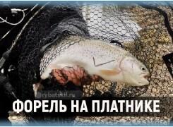 Ловля форели на платнике и рабочие снасти для рыбалки