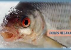 Секреты рыбалки на чебака зимой и выбор приманок