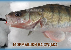Как выбрать мормышки на судака для зимней рыбалки