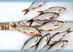 Зимняя рыбалка на плотву и поиск рыбы со льда