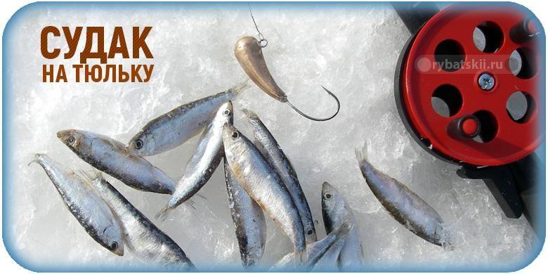 Зимняя ловля судака на тюльку и подготовка к рыбалке