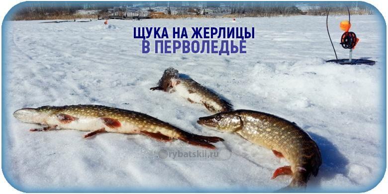 Ловля щуки зимой на жерлицы по первому льду и нюансы рыбалки