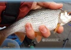 Весенняя ловля плотвы на фидер и подготовка к рыбалке