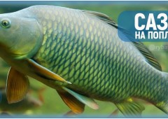 Рыбалка на сазана с поплавком и оснастка удочки для ловли