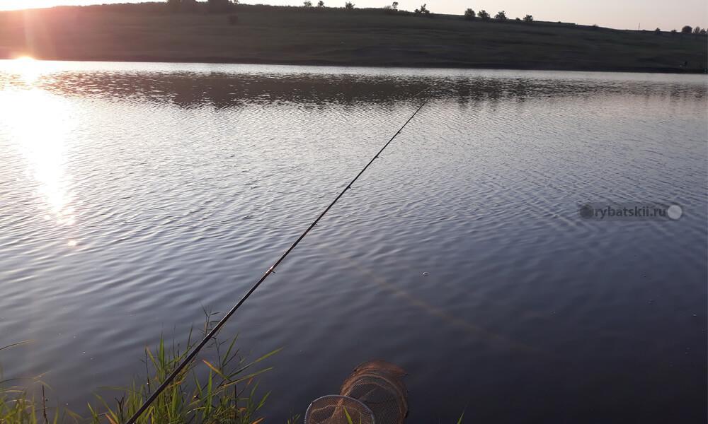 Фото с рыбалки на фидер. Подлещик.