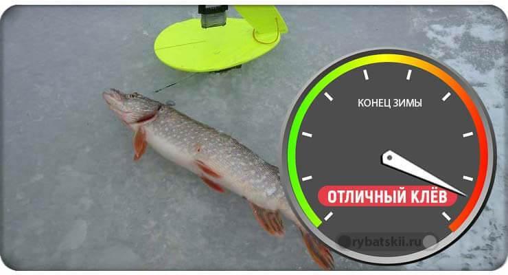 Клёв рыбы в конце зимы