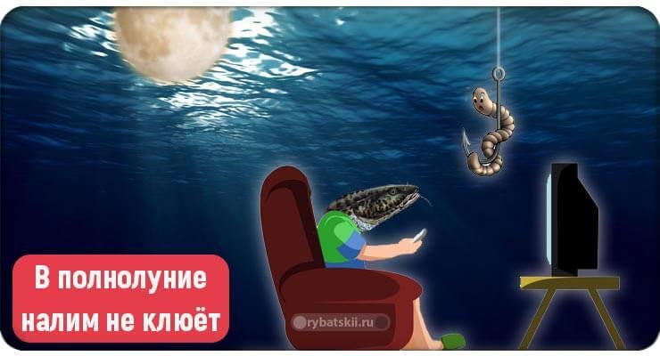 Рыба и телевизор