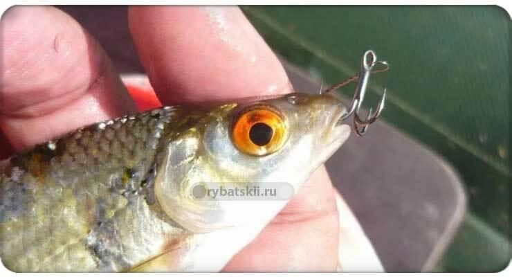Рыба с крючком в ноздрях