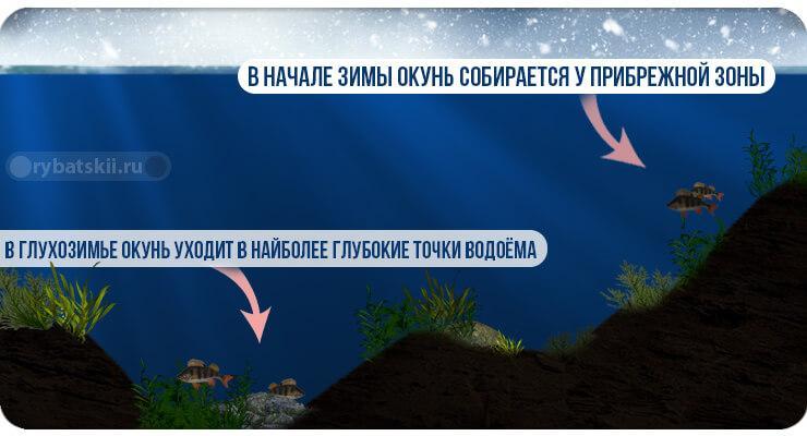 Раположение окуня в водоёме