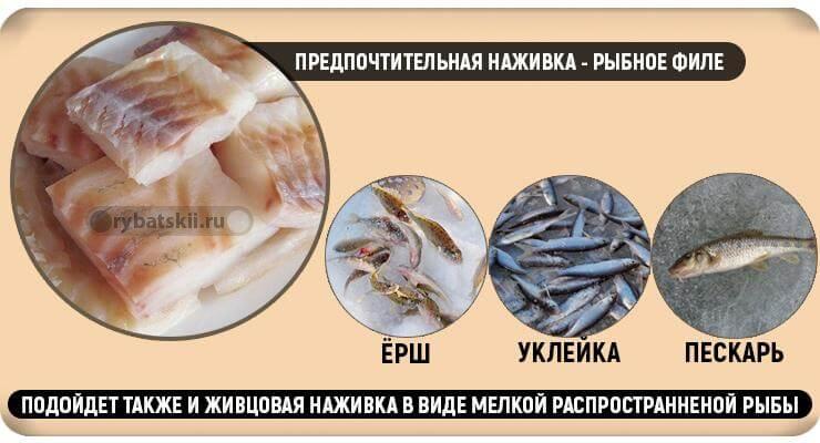 Живец и филе рыбы