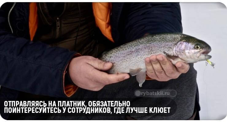 Рыбак держит рыбу