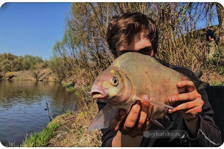 Тактика весенней рыбалки на фидер и подготовка к ней