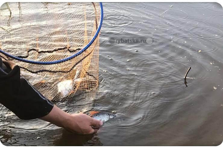 Рыбак отпускает рыбу