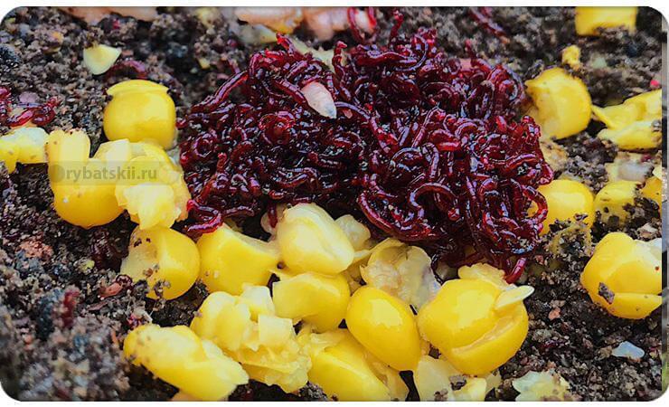 Мотыль и кукуруза в прикормке