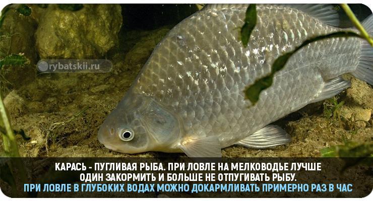 Как сварить пшено для рыбалки на карася чтобы обеспечить улов