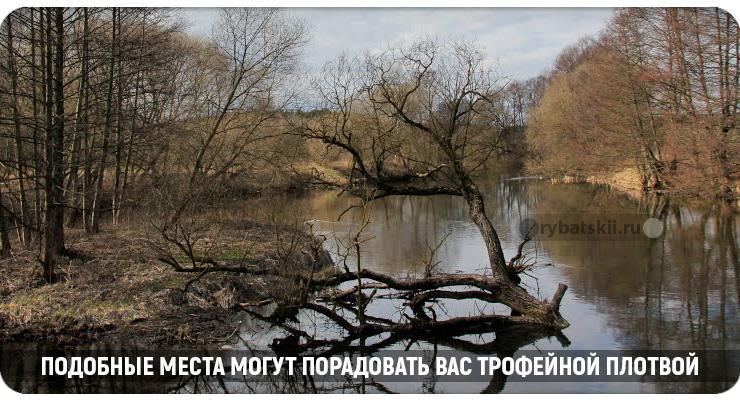 Коряги в озере осенью