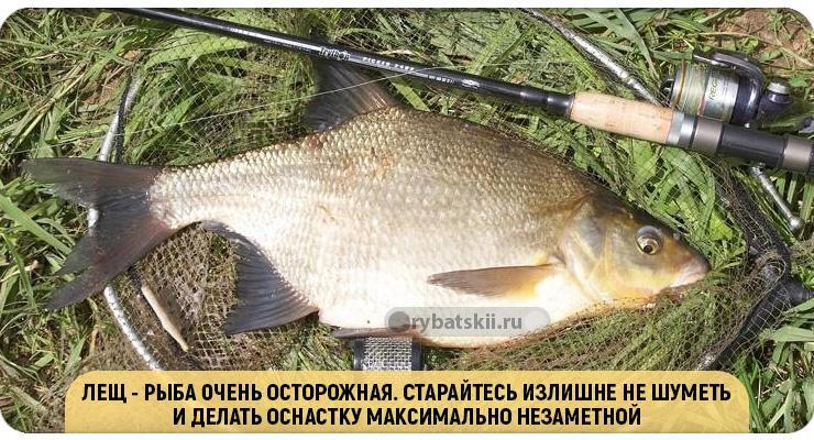 Ловля рыбы в сентябре на фидер
