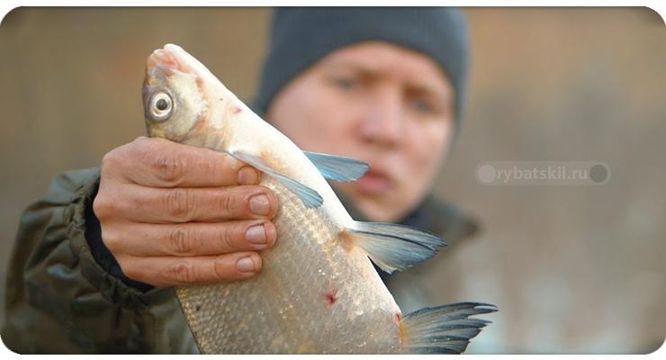 Тактика рыбалки на леща осенью на фидер