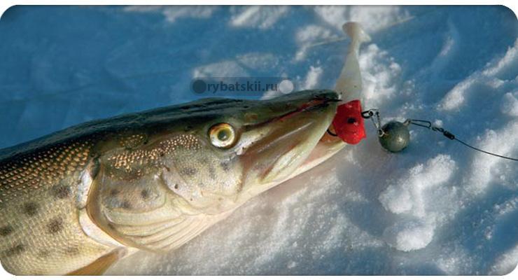 Уловистые приманки для ловли щуки зимой