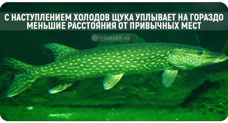 Зимняя рыбалка на щуку с блесной со льда