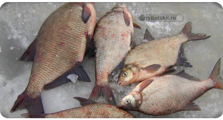Снасть коромысло для зимней рыбалки и ловля на него