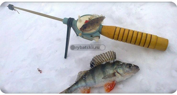 Ловля окуня на малька зимой со льда