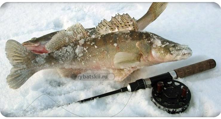 Раттлины и вибы для зимней рыбалки на судака