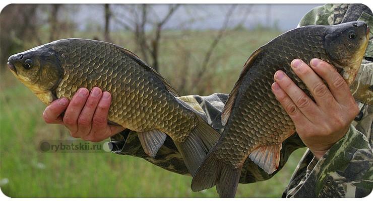 Тактика рыбалки на карася в марте