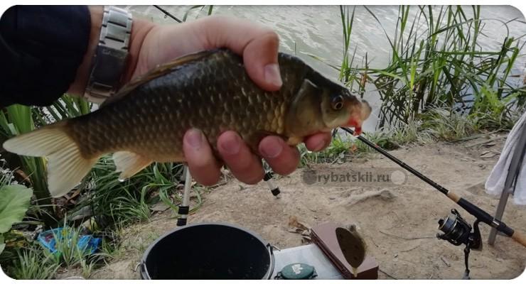 Тактика весенней рыбалки на карася и поиск рыбы