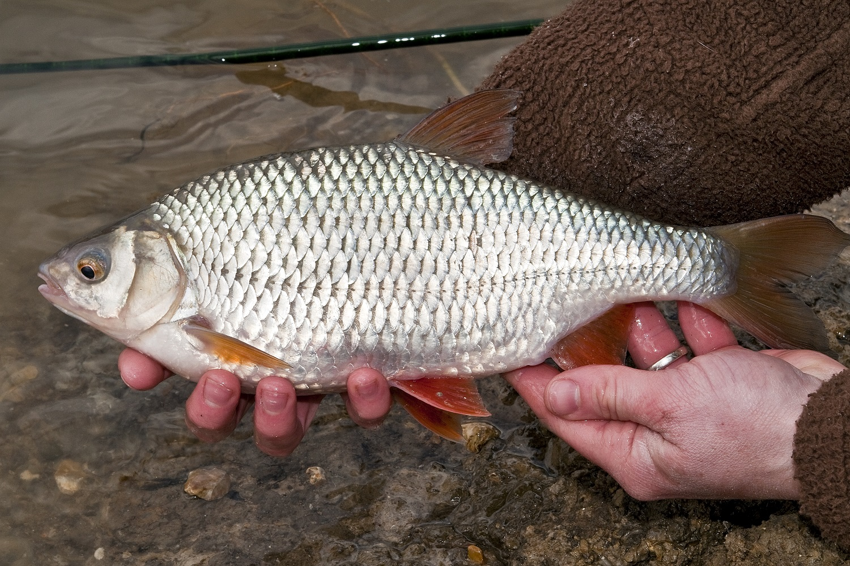 Фото с рыбалки от 08/03/2021