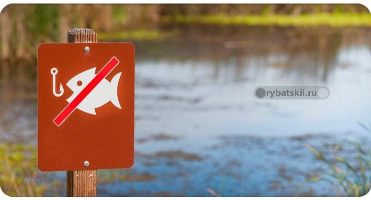 Запрет на рыбалку во время нереста
