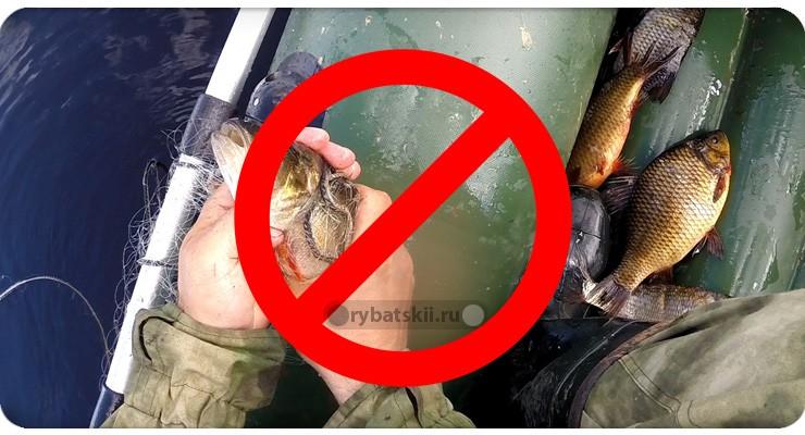 Запрет ловли на сети