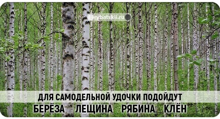 Деревья для самодельного удилища
