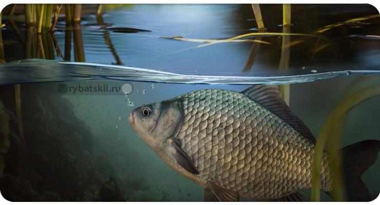 Рыба у поверхности