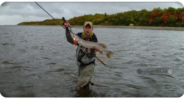 Ловля хищника осенью