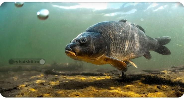 Рыба и кислород