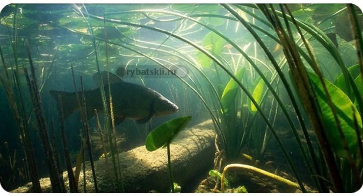 Рыба в яме