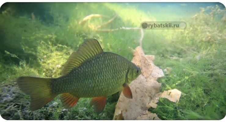 Рыба на глубине